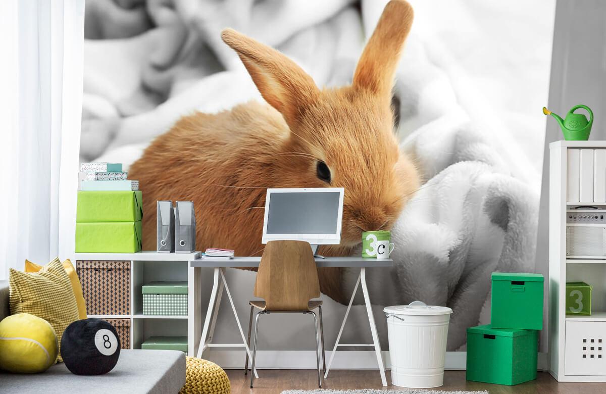 Wallpaper Brown rabbit 4