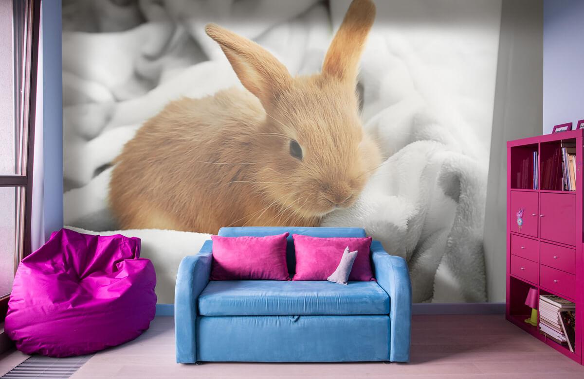 Wallpaper Brown rabbit 1