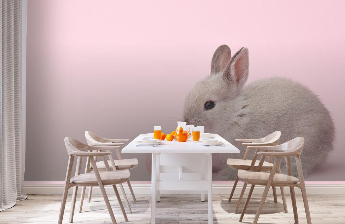 Wallpaper Rabbit with egg 2
