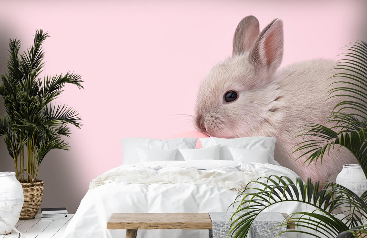 Wallpaper Rabbit with egg 7