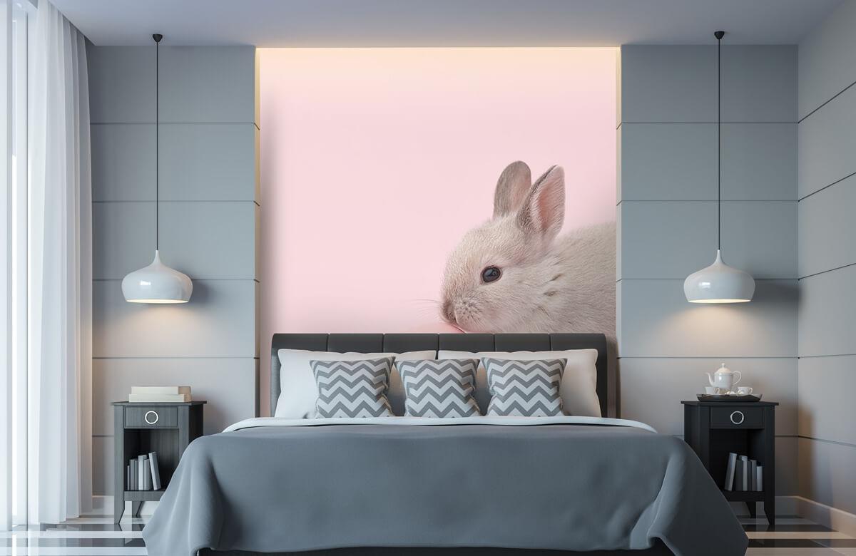 Wallpaper Rabbit with egg 11