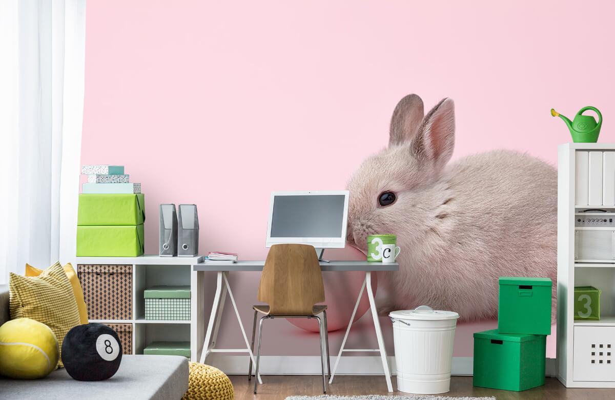 Wallpaper Rabbit with egg 4
