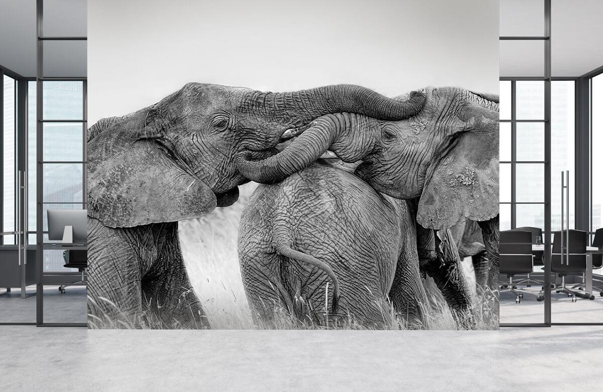 Elephant Playing 5