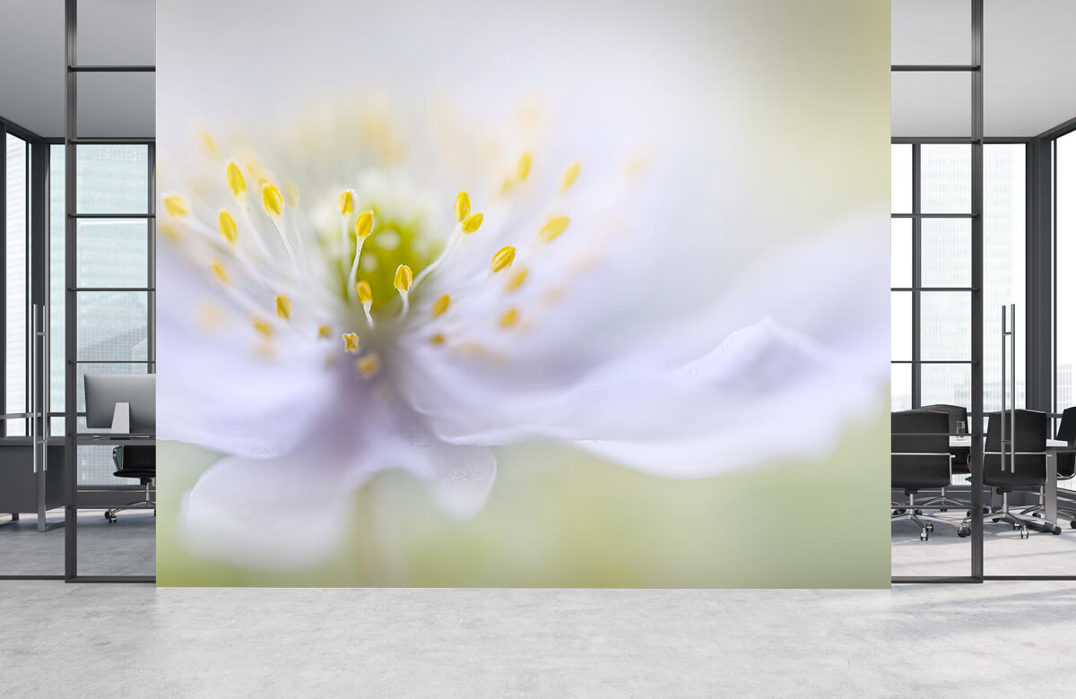 Macro Anemone Beauty 7