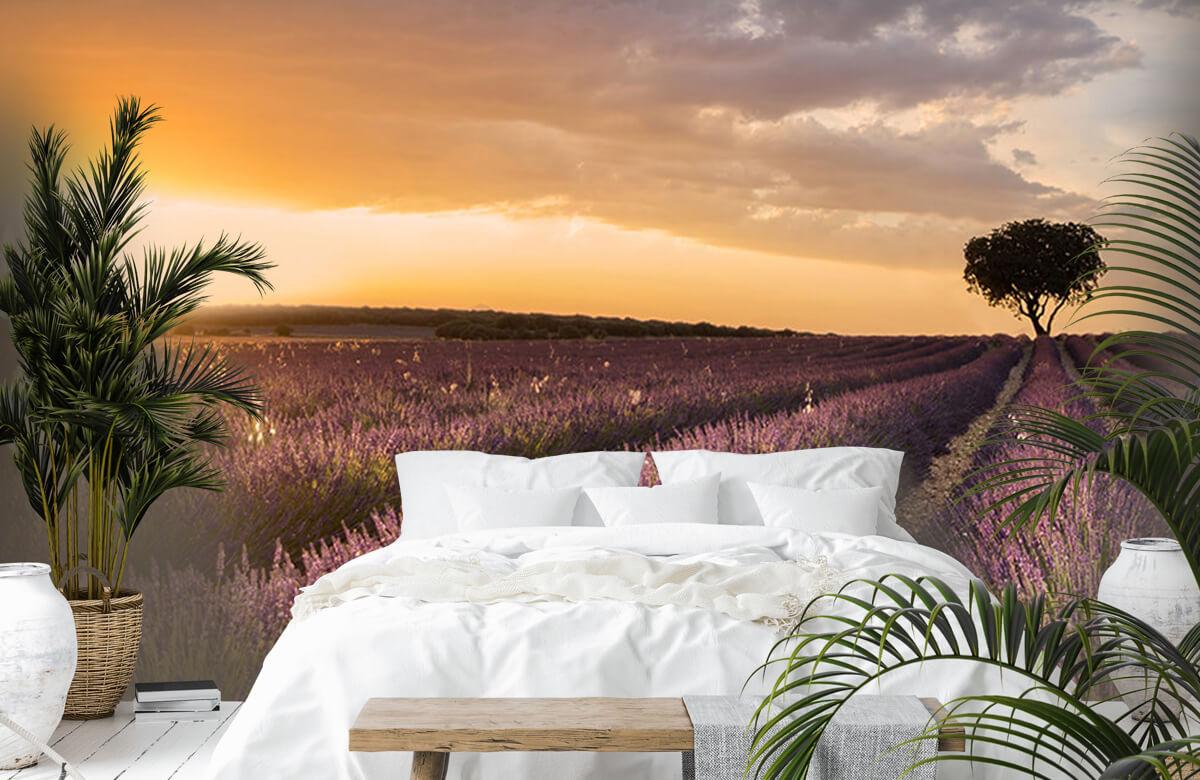 Landscape Destination lavender 11