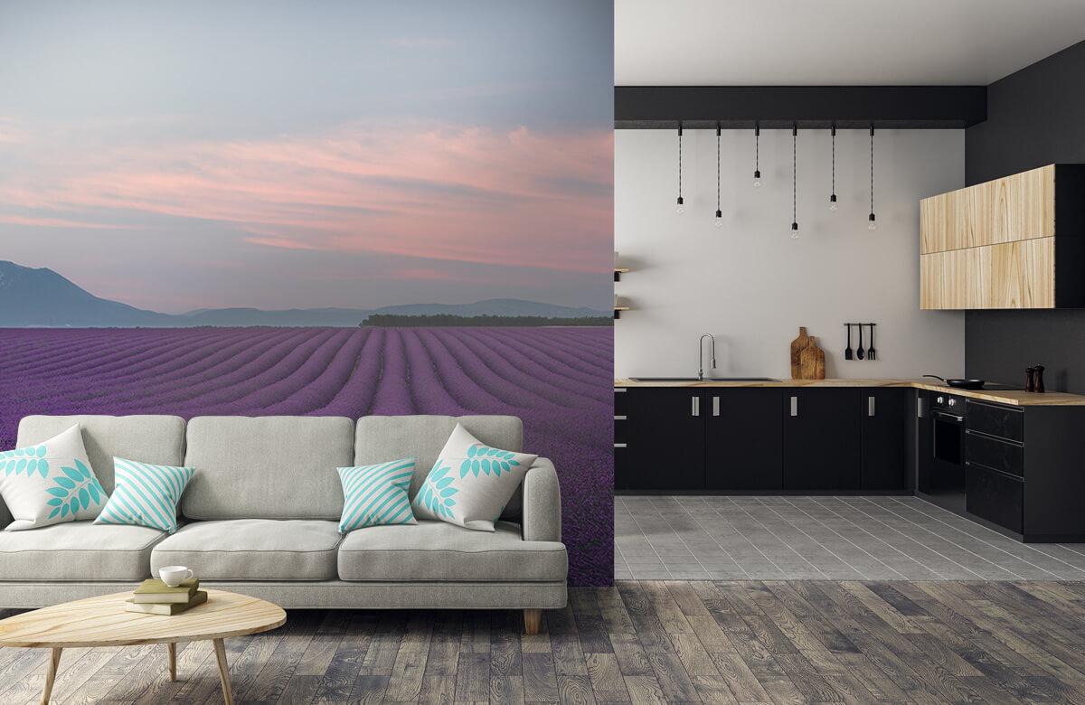 Landscape Lavender field 5