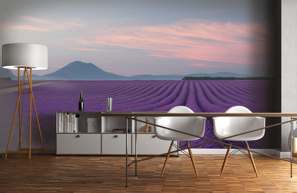 Landscape Lavender field 1