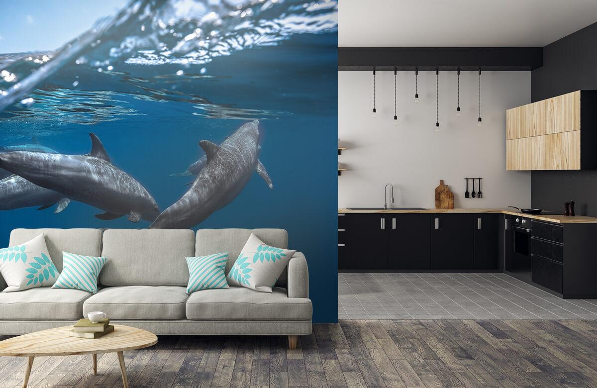 Underwater Dolphins 9