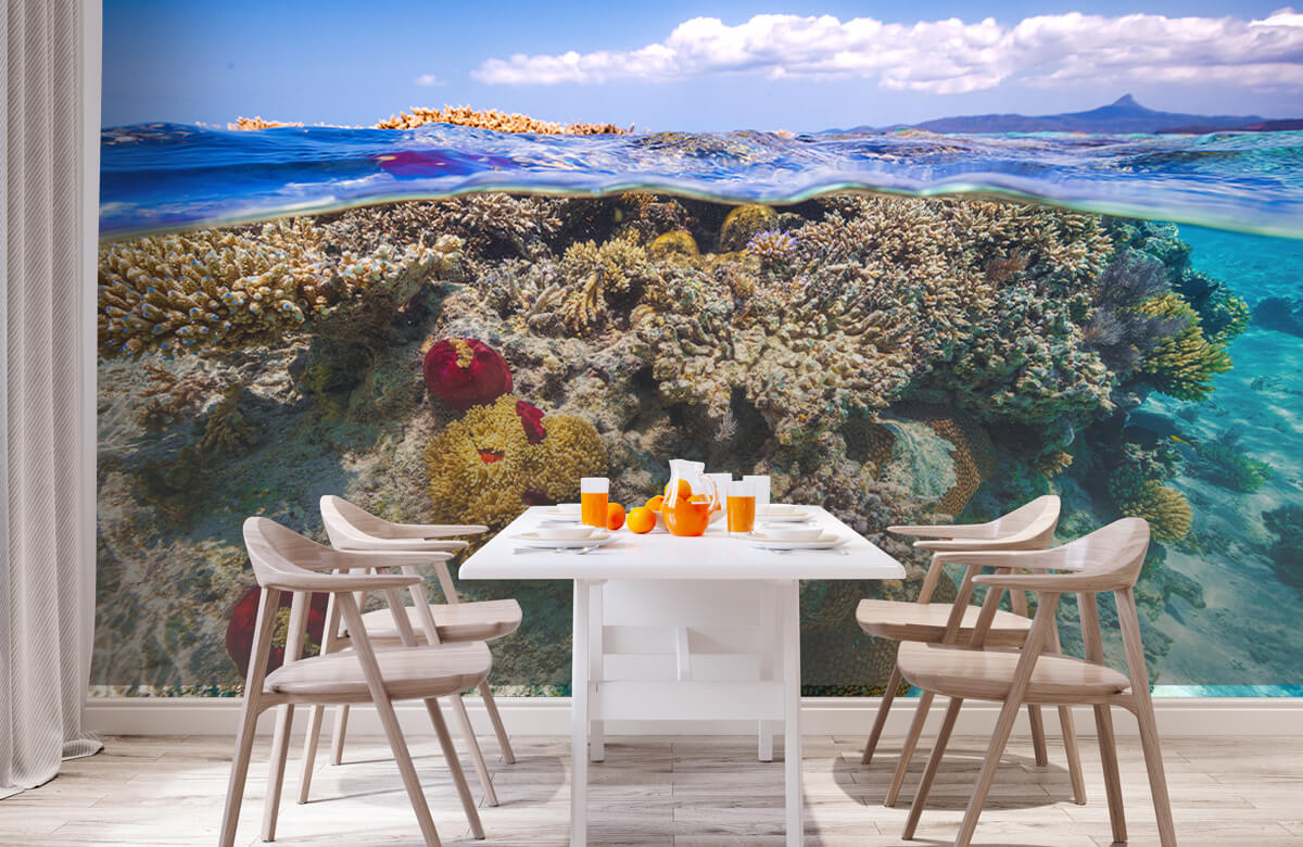 Underwater Mayotte : The Reef 6