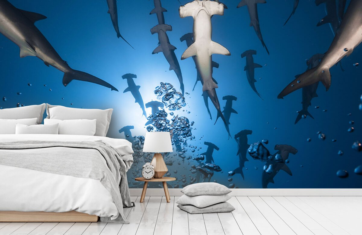 Underwater Hammerhead Shark 9