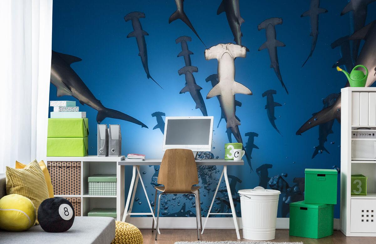Underwater Hammerhead Shark 1