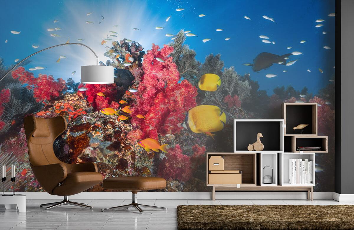 Reef life 8