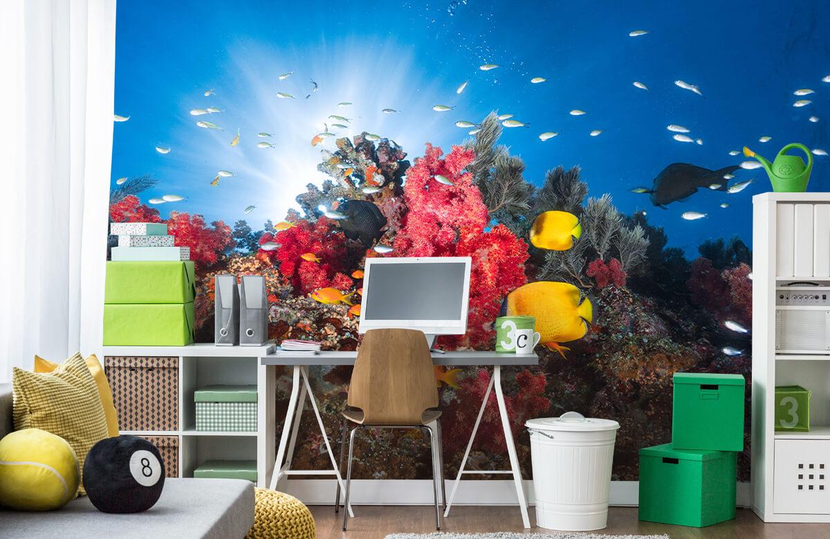 Reef life 11