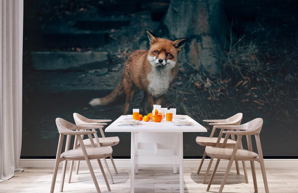 Wallpaper Curious fox 4