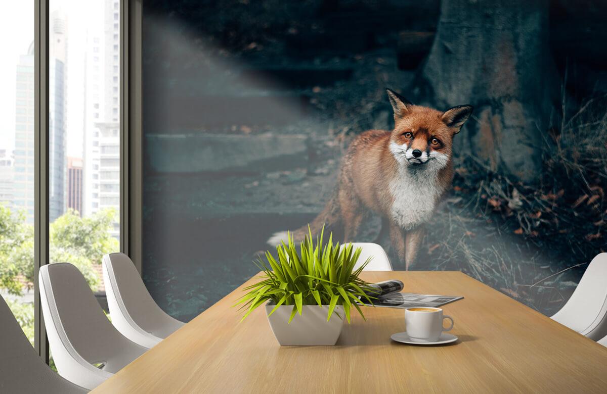 Wallpaper Curious fox 6
