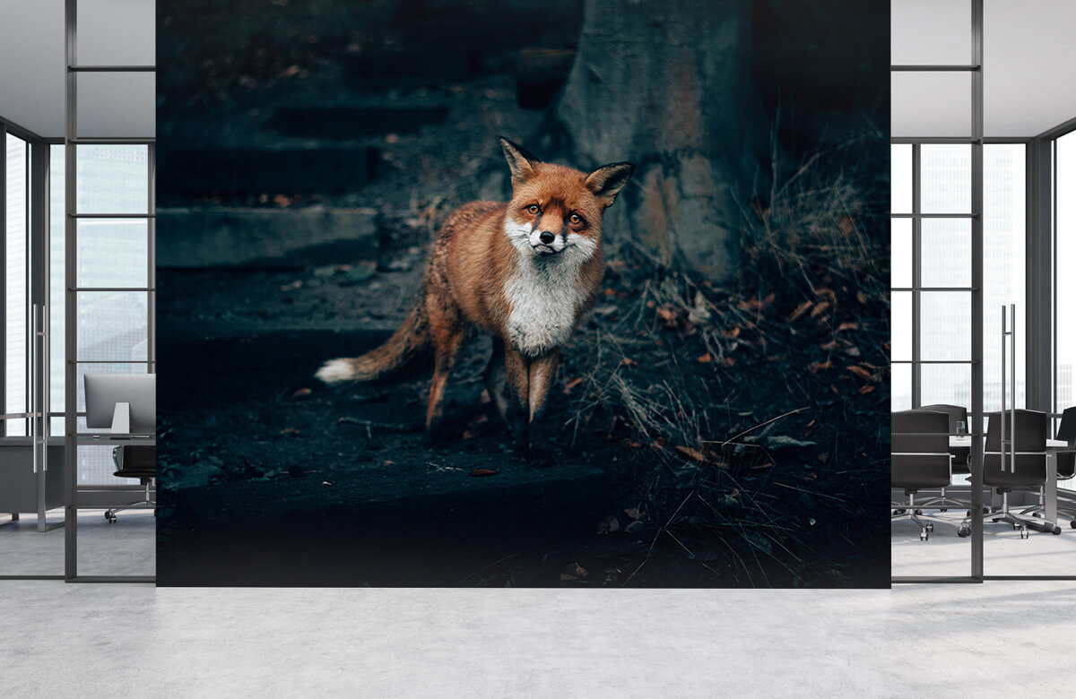 Wallpaper Curious fox 8
