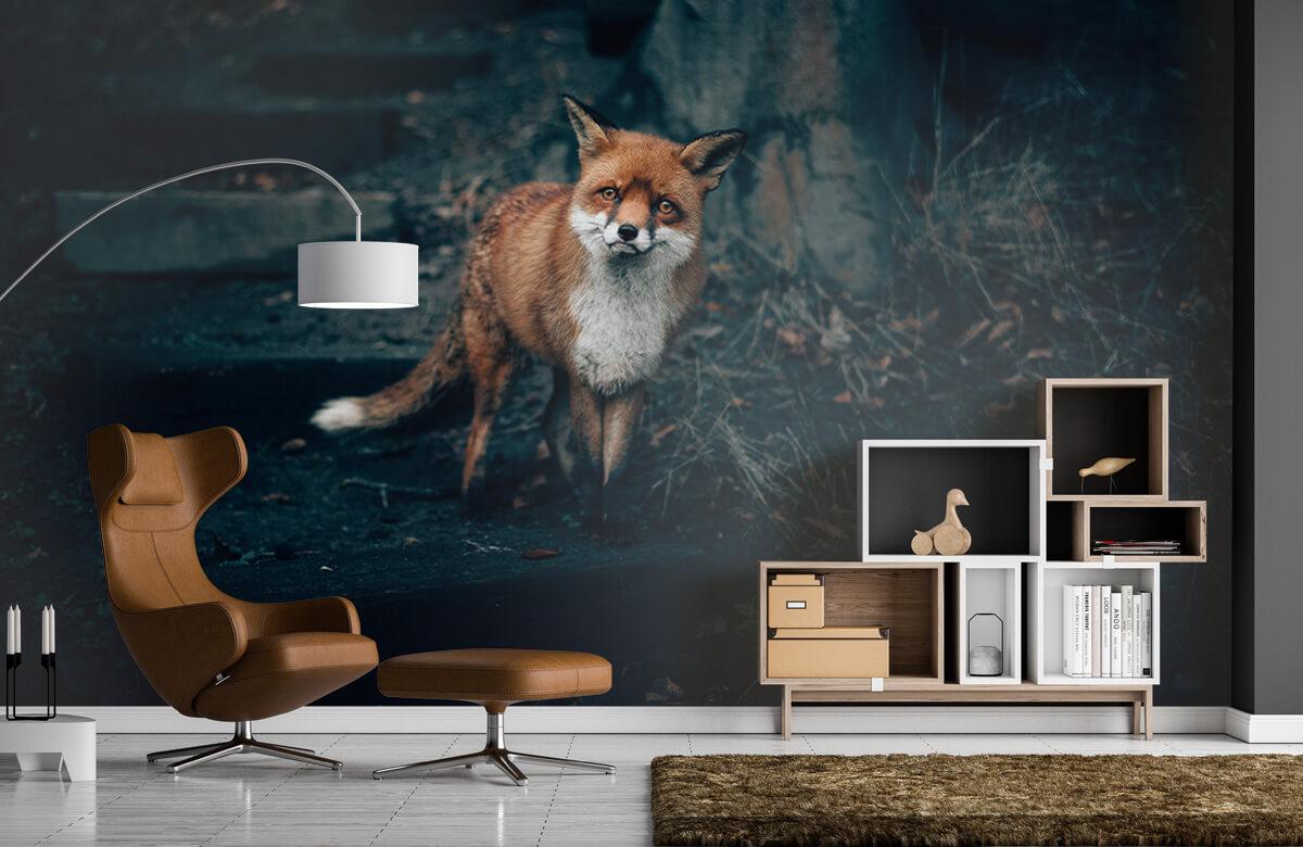Wallpaper Curious fox 5