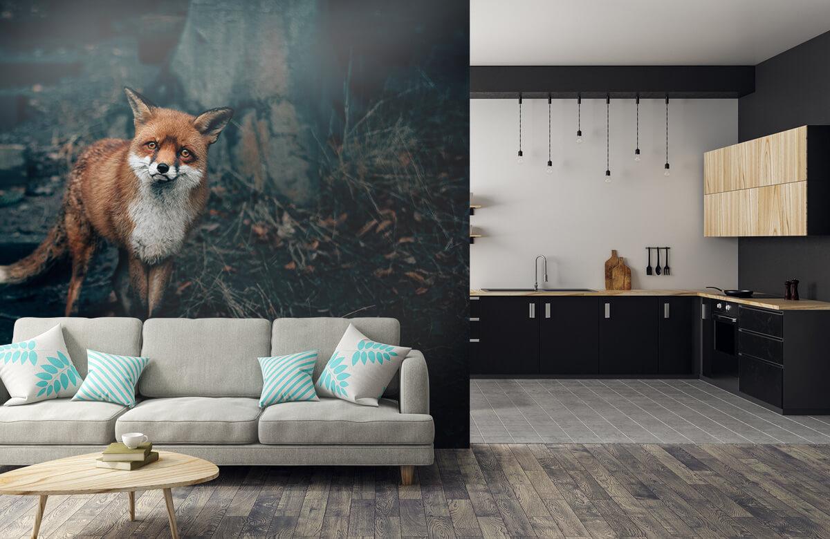 Wallpaper Curious fox 10