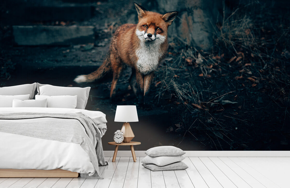 Wallpaper Curious fox 9