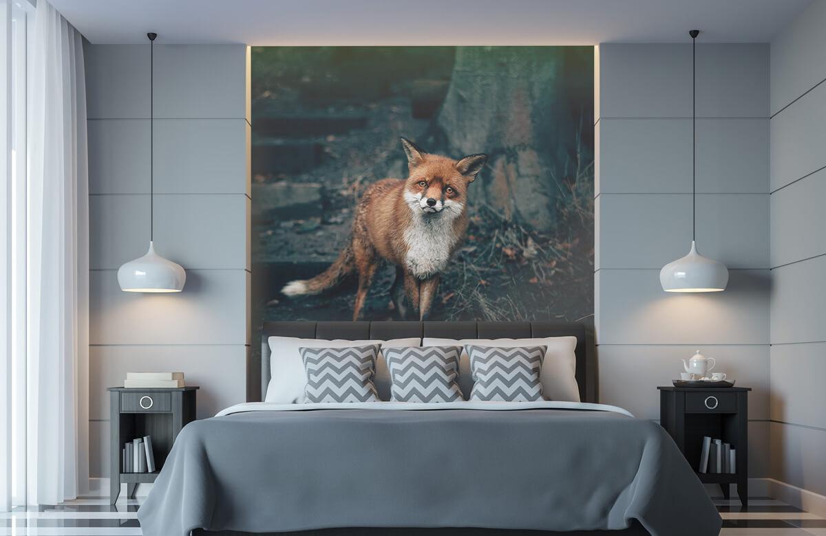 Wallpaper Curious fox 11