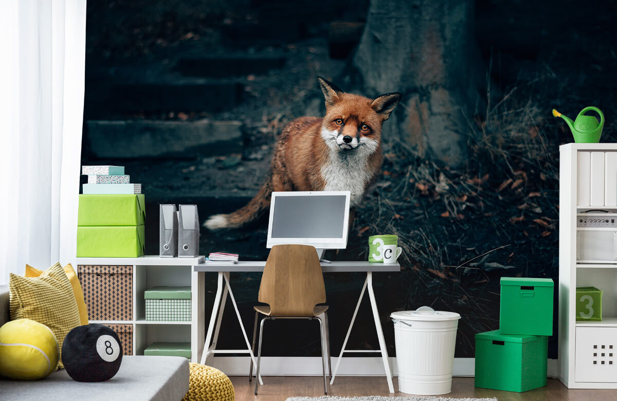 Wallpaper Curious fox 1