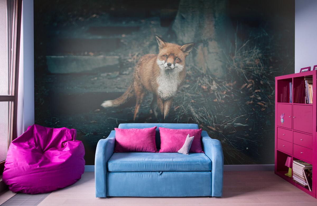 Wallpaper Curious fox 3