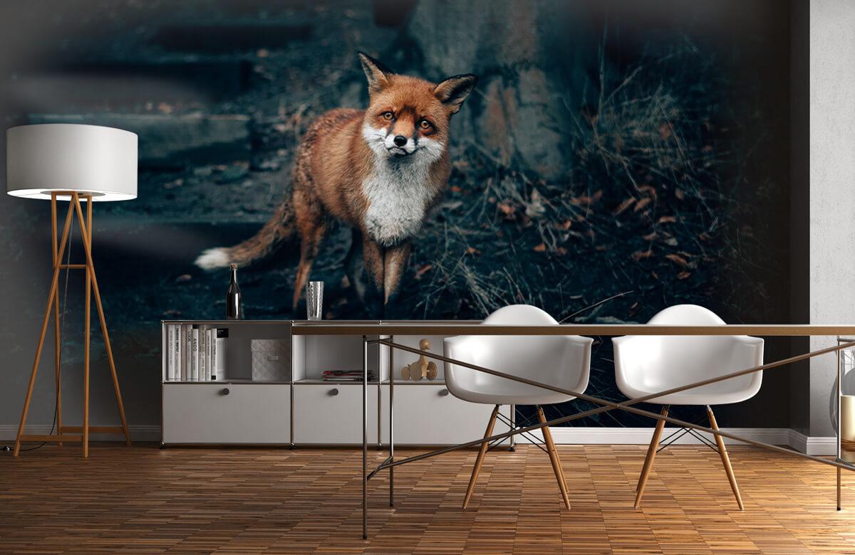 Wallpaper Curious fox 2