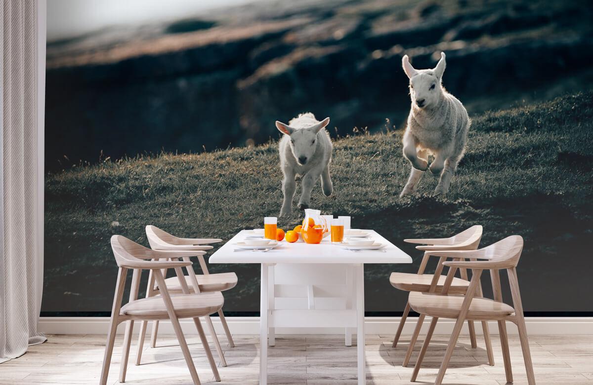 Wallpaper Lambs playing 5