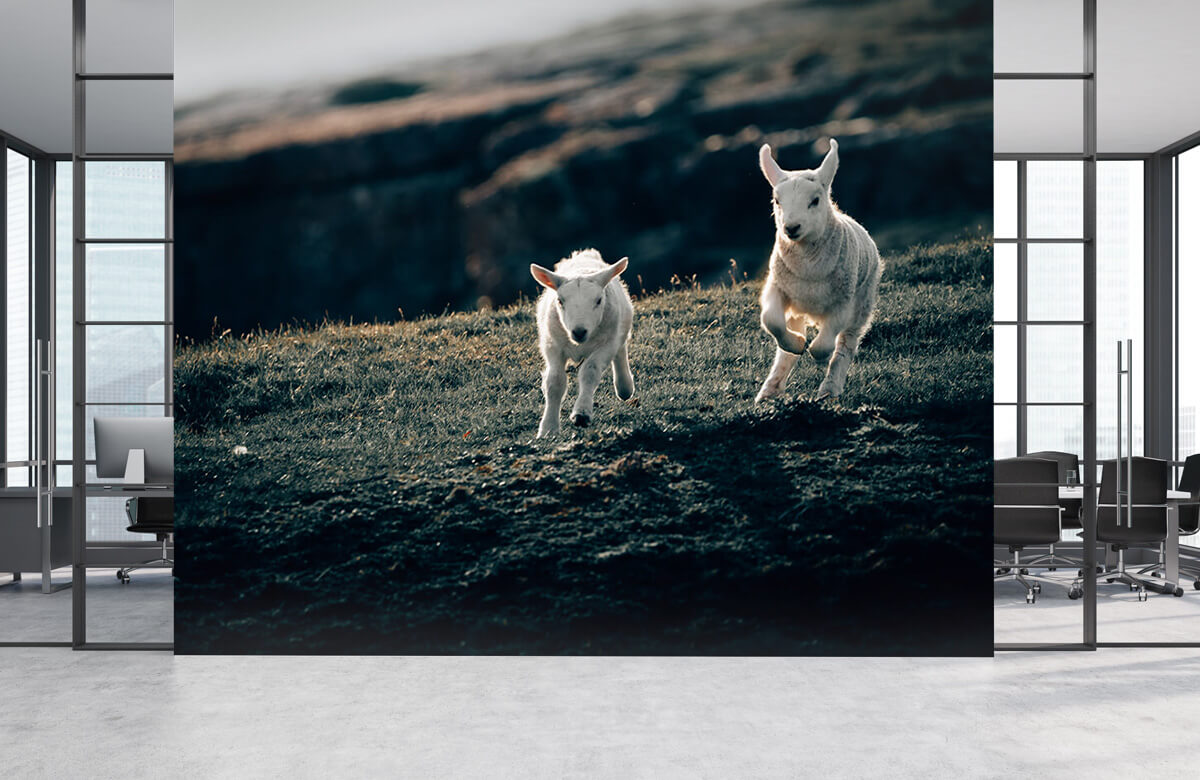 Wallpaper Lambs playing 8