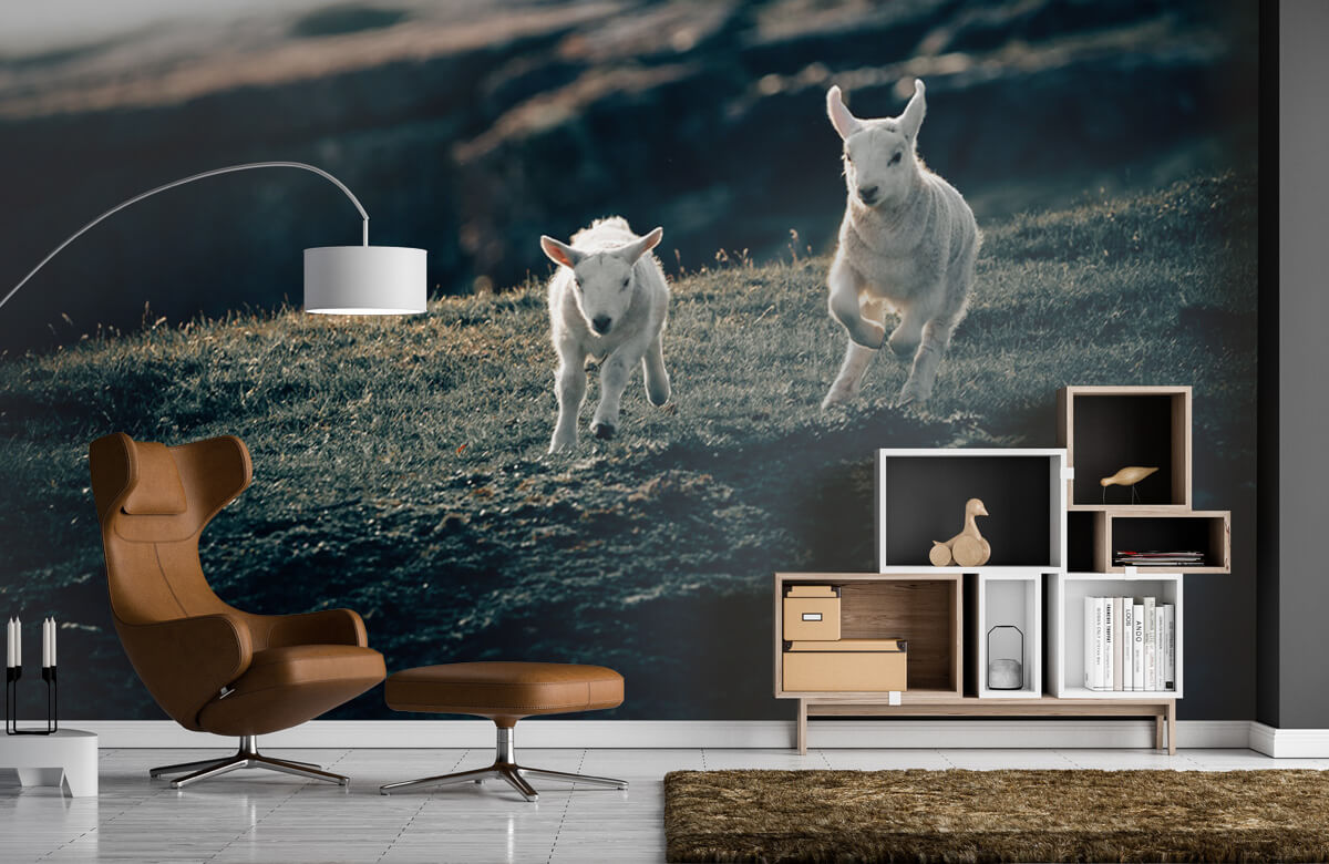 Wallpaper Lambs playing 10