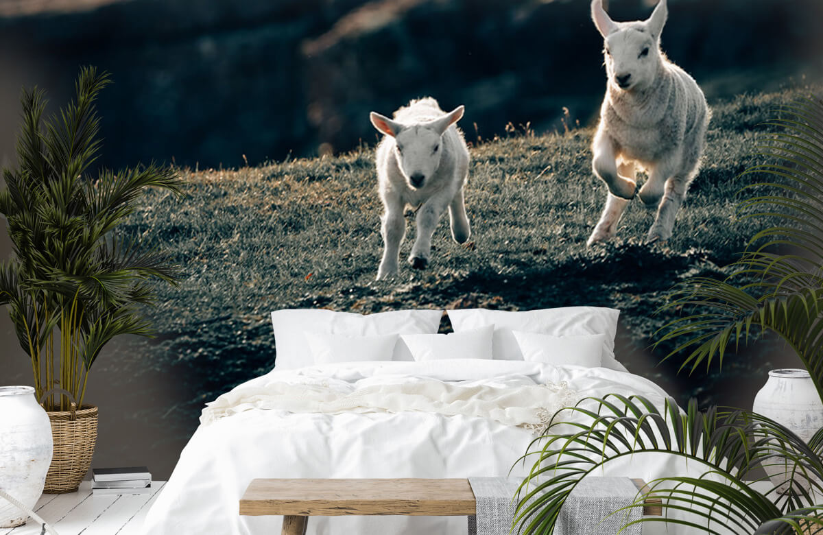 Wallpaper Lambs playing 4