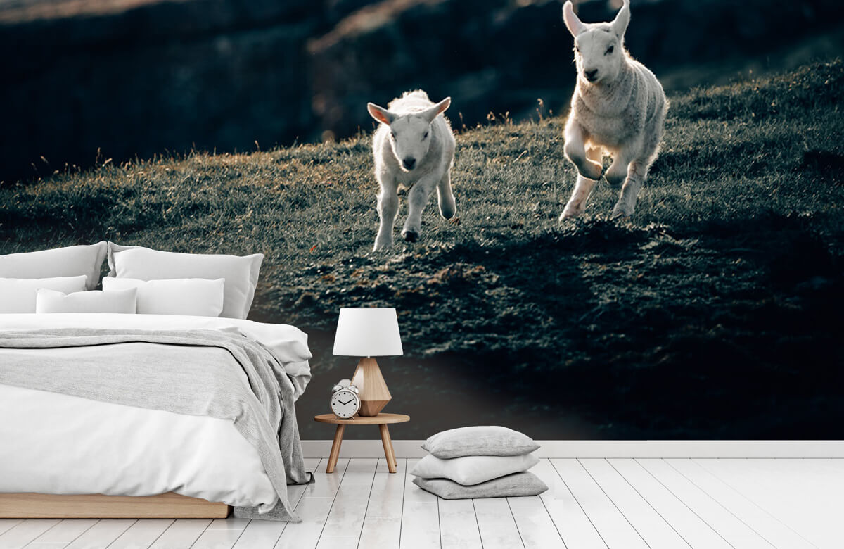 Wallpaper Lambs playing 9