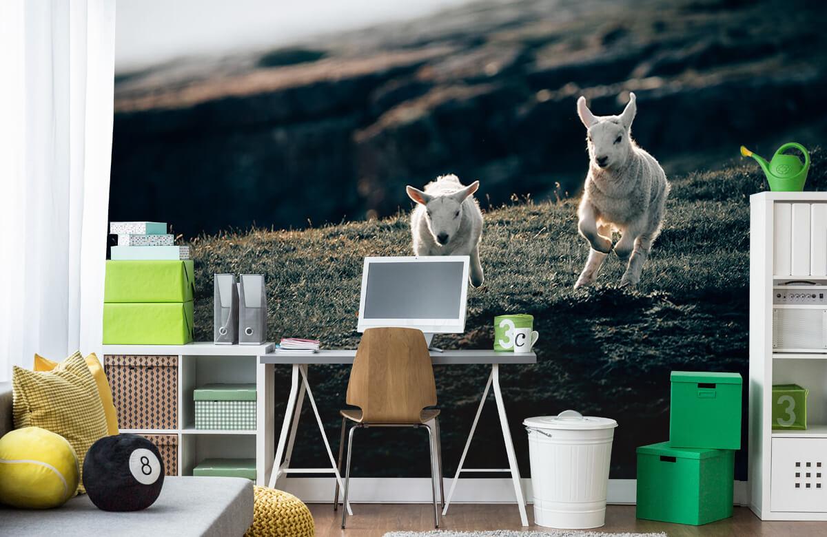 Wallpaper Lambs playing 6