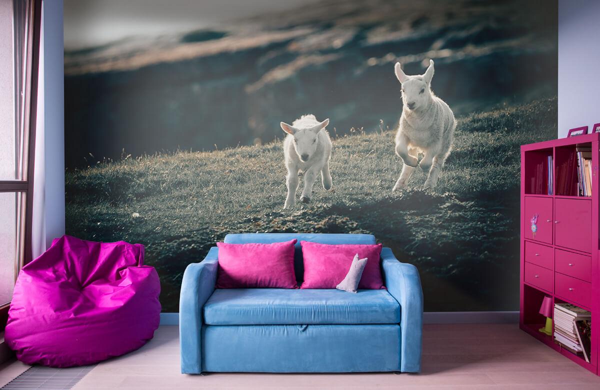 Wallpaper Lambs playing 1