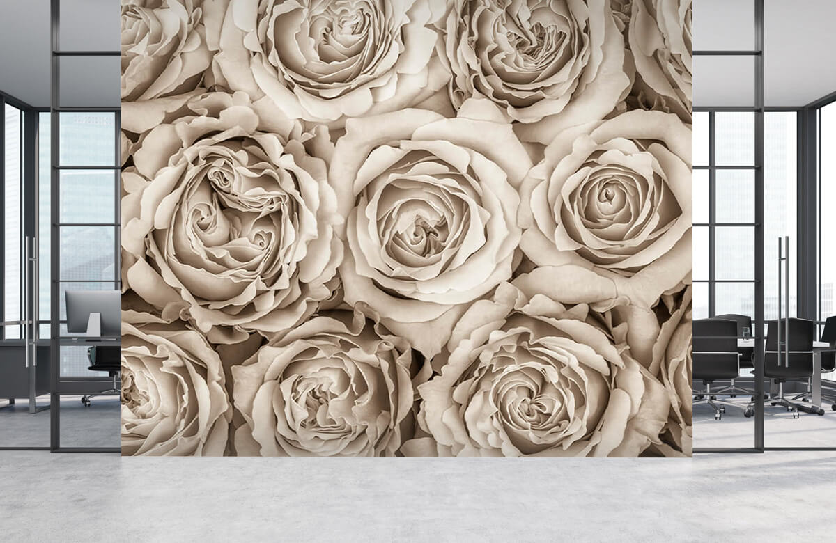Background of roses 6