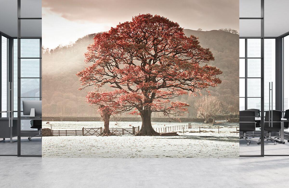 Oak tree 6