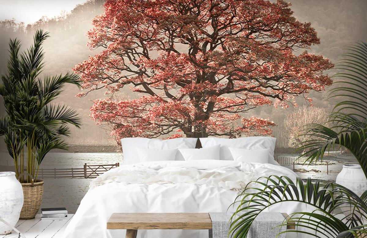 Oak tree 8