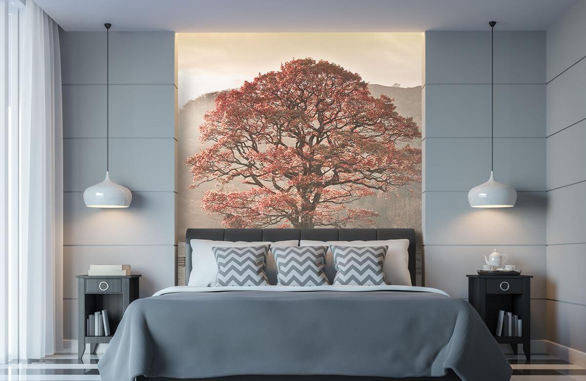 Oak tree 11