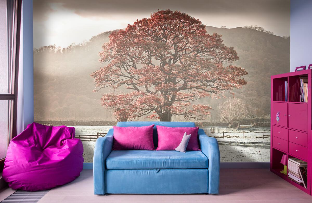 Oak tree 4
