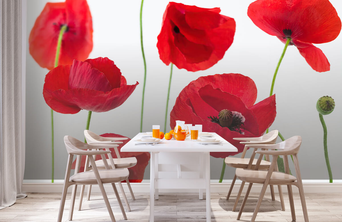 Poppies on white background 2
