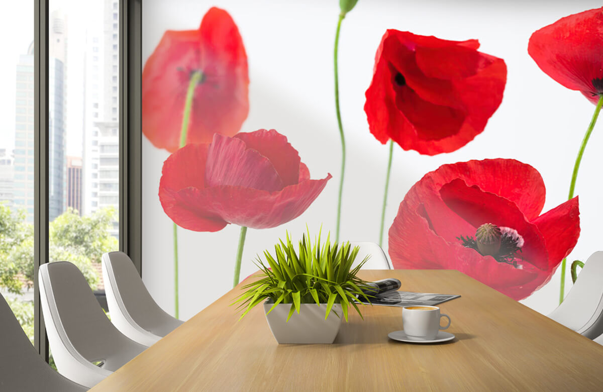 Poppies on white background 4