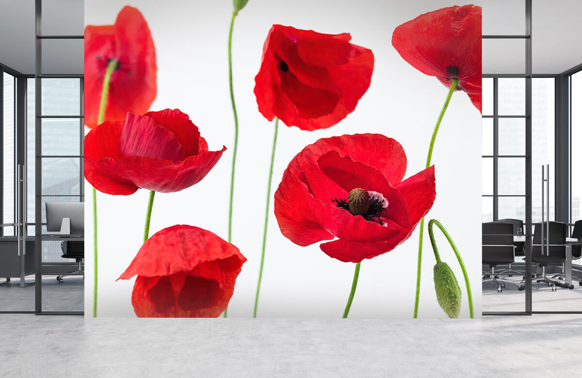 Poppies on white background 6