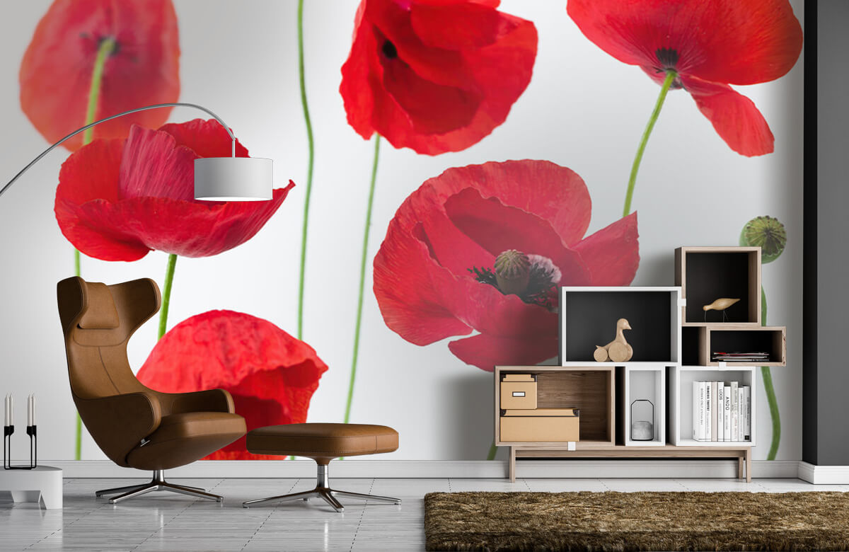 Poppies on white background 7