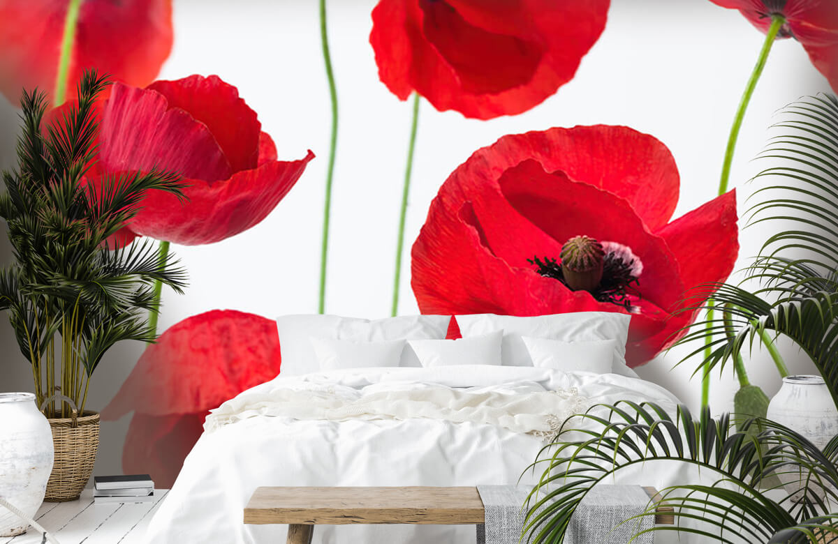 Poppies on white background 3