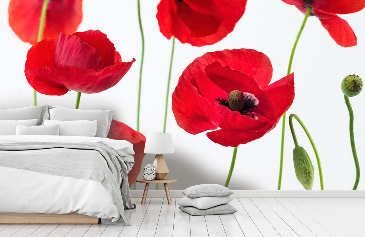 Poppies on white background 5