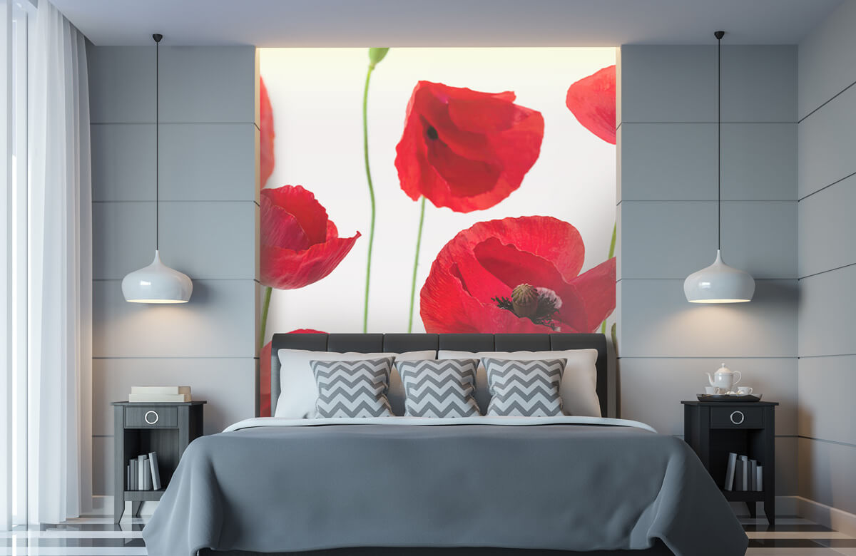 Poppies on white background 11
