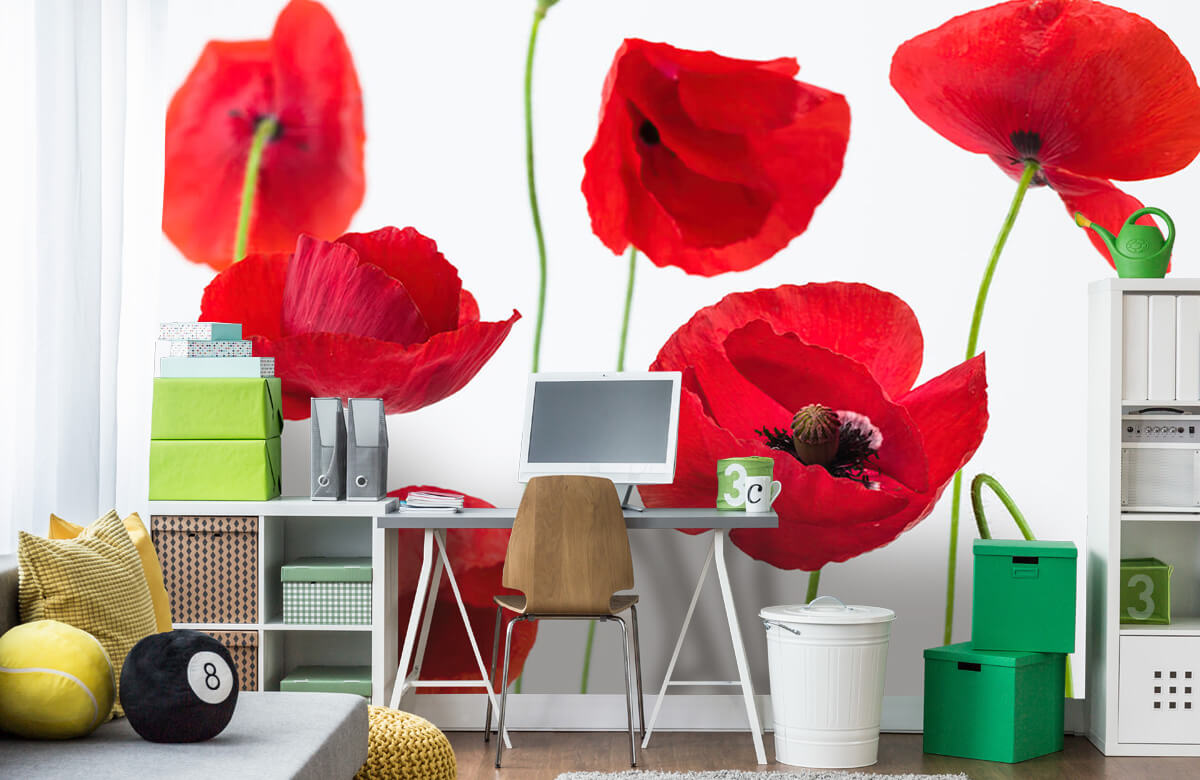 Poppies on white background 9