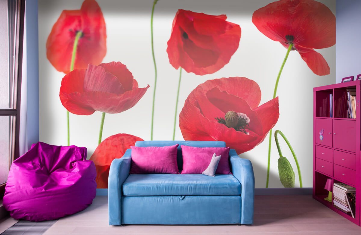 Poppies on white background 1