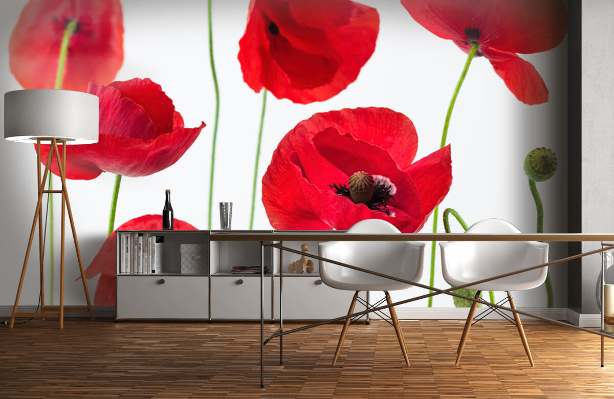 Poppies on white background 10