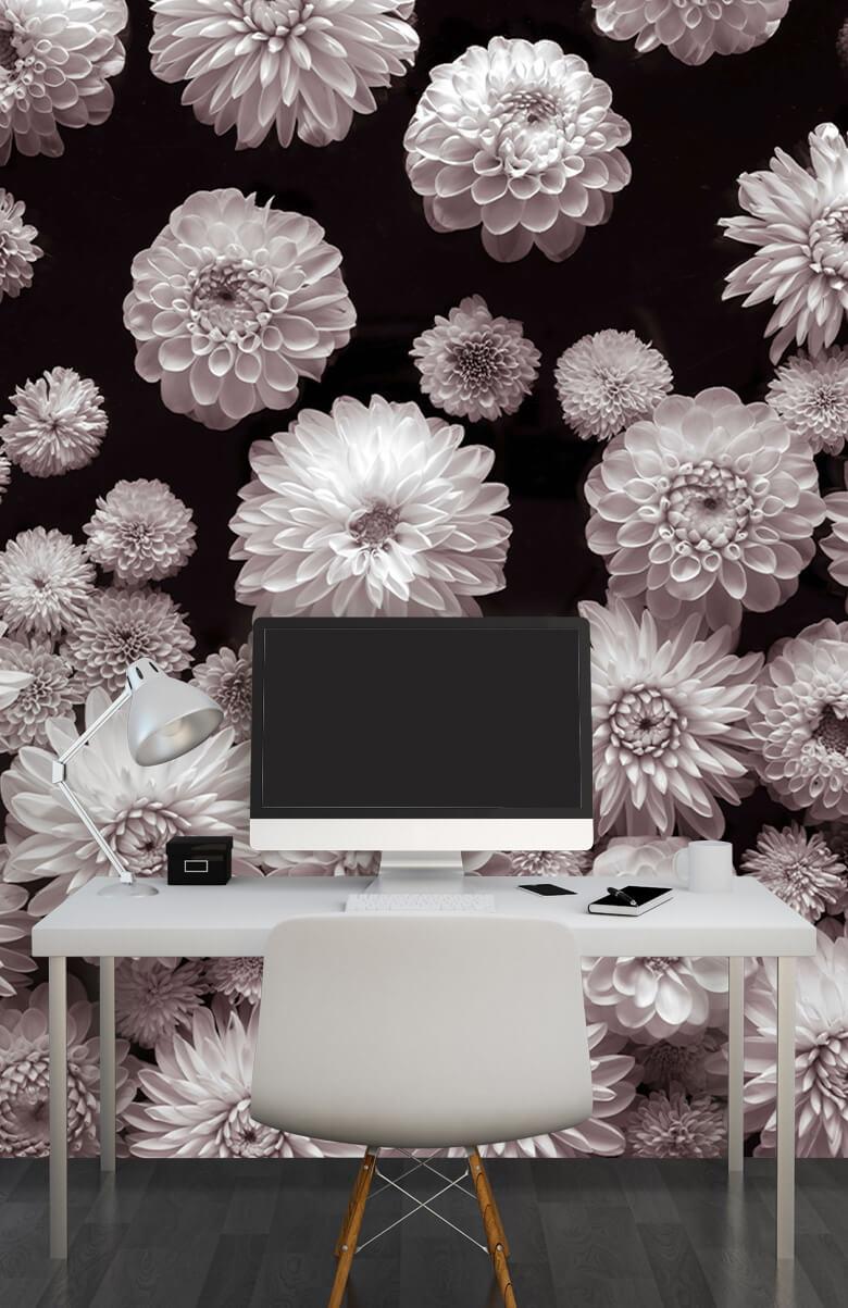 Dahlia Flowers 8